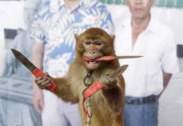 Цирковая обезьянка