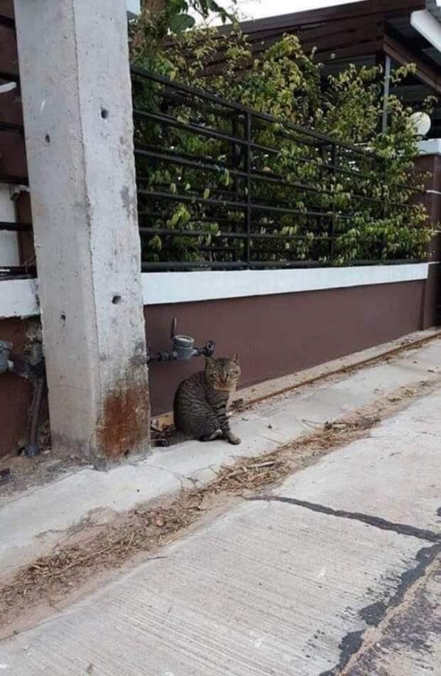 Забавная история кота, который сбежал и вернулся с запиской о долге в целых три скумбрии!