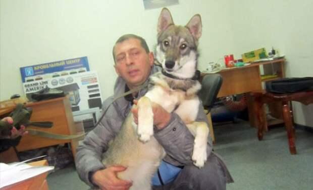 Под Воронежем мужчина пытался застрелить соседскую собаку, стоимостью 125 тысяч рублей