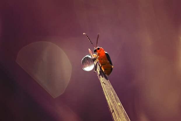 Макро насекомые Динса Сильвера