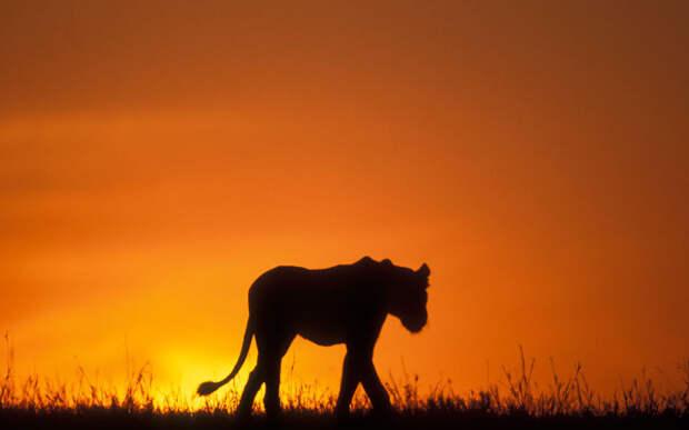 Загадочные животные на фоне заката
