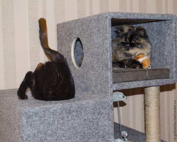 Строим кошкин дом за пару дней
