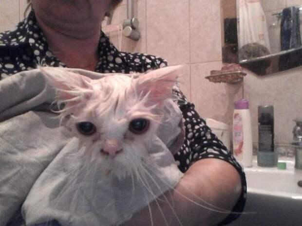 Вторая жизнь бездомного кота добро, животные