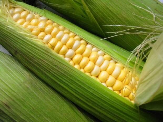 corn-e1379026764879