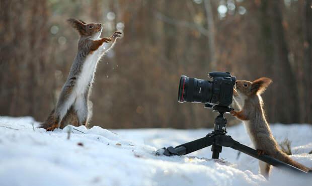 Дикий фотограф природы Вадим Трунов, белки, животные, фотограф