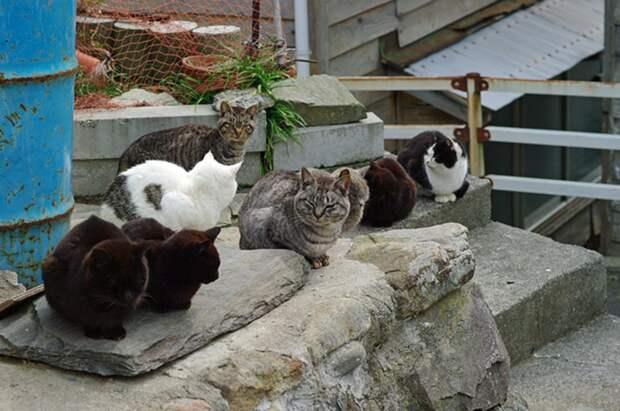 Кот здесь власть или большая прогулка по Острову котов