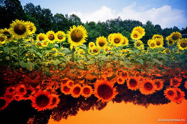 Зеркальные пейзажи Ходаки Ямамото
