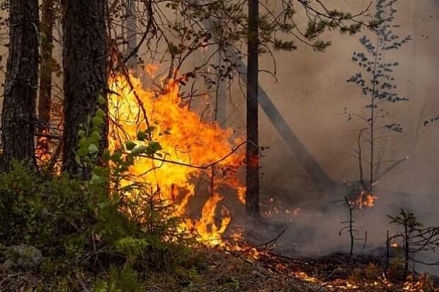 В Калифорнии из-за лесных пожаров эвакуировали свыше 16 тыс. человек