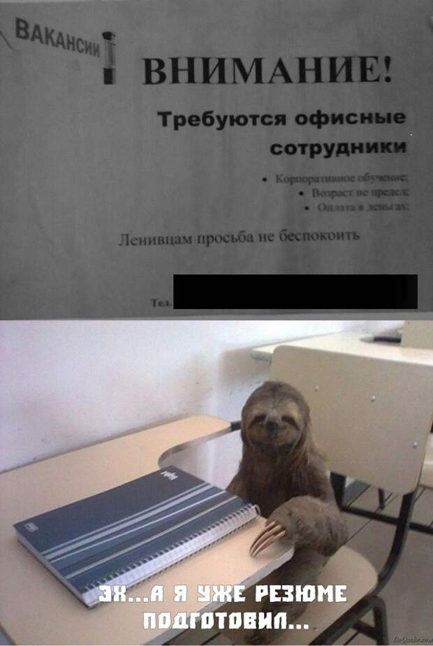 Дискриминация ленивцев! люди, объявление, прикол, юмор