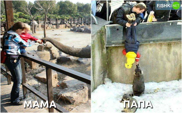 Родители привели ребёнка в зоопарк. дети, мамы, папы, юмор