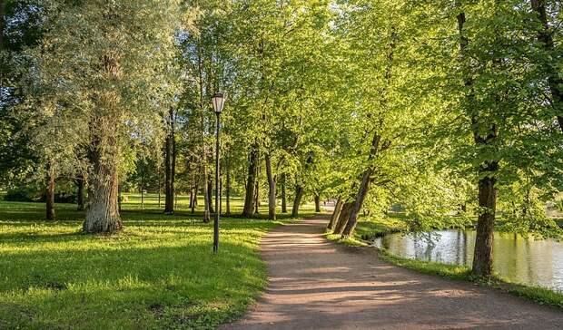 Экологи: Крупные компании должны помогать озеленять города