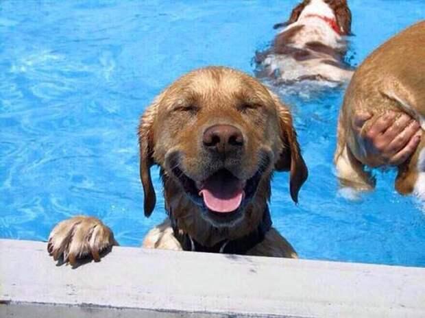 8. Самый. Лучший. День. В жизни. бассейн, животные