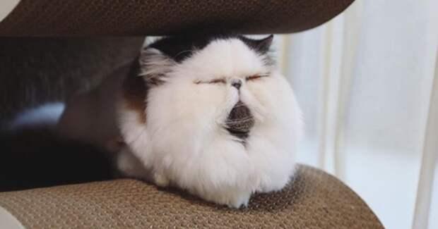 Томный котик поимени Зуу покоряет сердца пользователей
