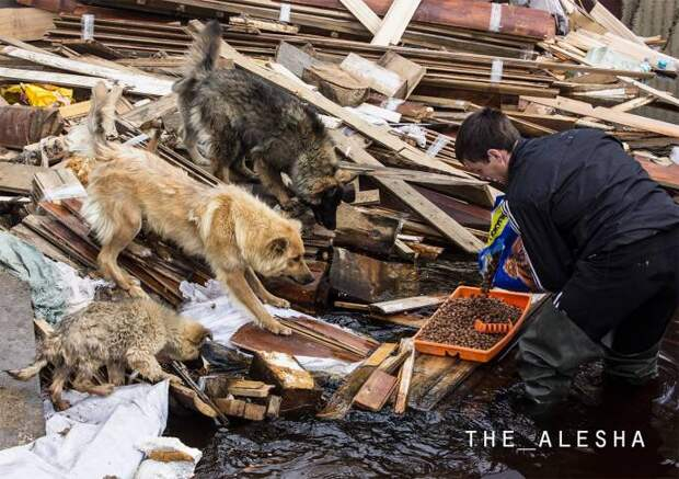 Спасение животных из затопленных дачных поселков Нижневартовска