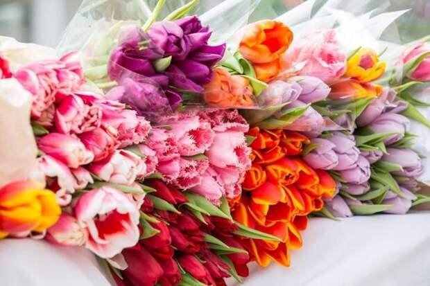 На Кубани перед 8 марта открылись цветочные ярмарки