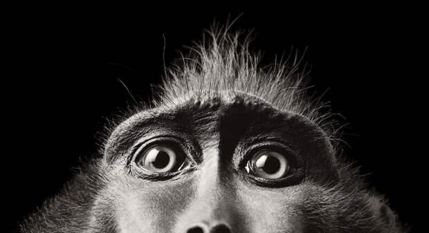 Глаза обезьяны