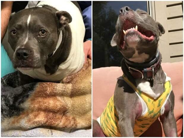 Ему оставалось жить 9 месяцев, но храбрый пес победил рак болезни животных, болезни собак, история, история спасения, питомцы, собака, собаки, хозяева
