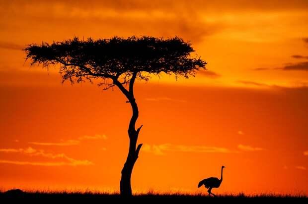 afrikanskie zakaty 12 Потрясающие африканские закаты от Пола Гольдштейна