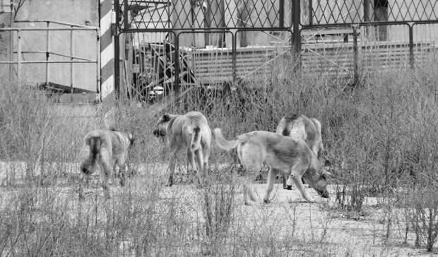 Стая бродячих собак насмерть загрызла маленького мальчика