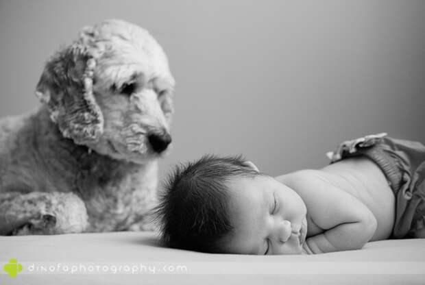 младенцы и собаки первая фотосессия (4)