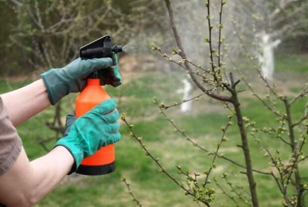 Как я обрабатываю свой сад от вредителей и болезней