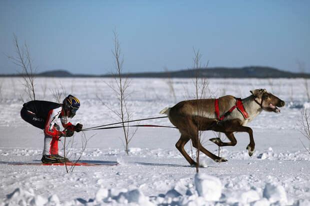 Необычная Лапландия. Заснеженное царство Санта-Клауса