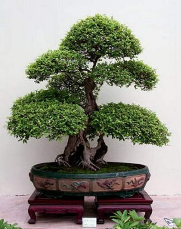 Мои деревья из пряжи «травка»/3576489_f57a9_bonsai (315x400, 34Kb)