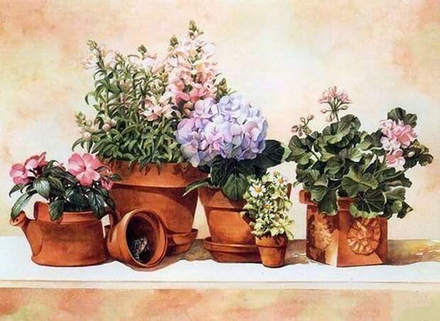 Как определить своё счастливое растение