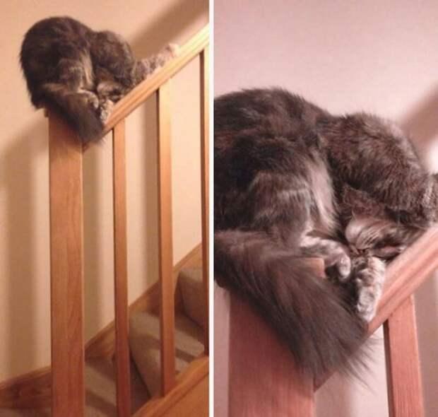 Кажется, этот кот овладел японским искусством сна. интересное, кошки, фотографии