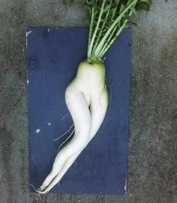 16. Не смотрите, я стесняюсь овощи, фрукиы