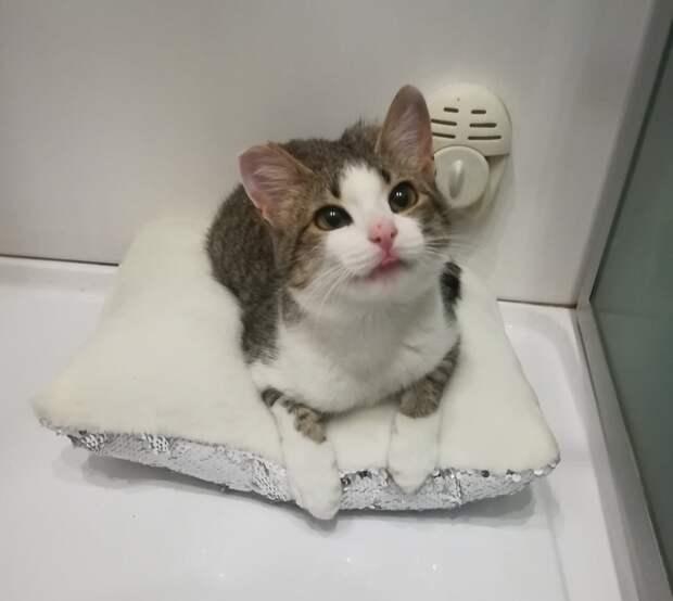 Жительница Северного Тушина ищет новый дом для брошенной кошки