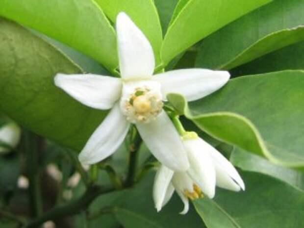 Знакомимся с экзотическими фруктами (Ч. 20-я)