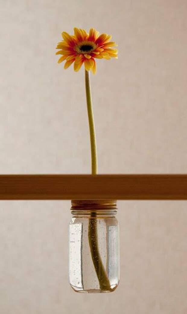 Цветок в полке