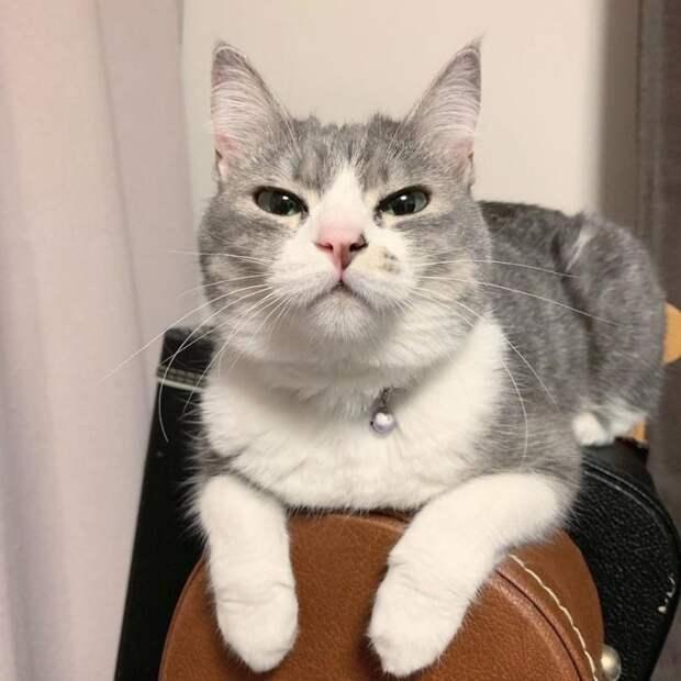 Кошка терпеть не может, когда человек садиться на «её кресло», но все тщетно