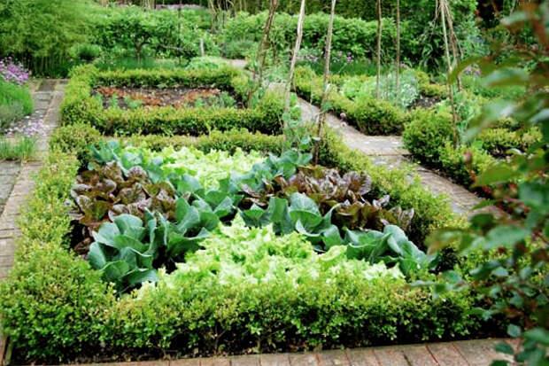 Уплотненные посадки овощных культур