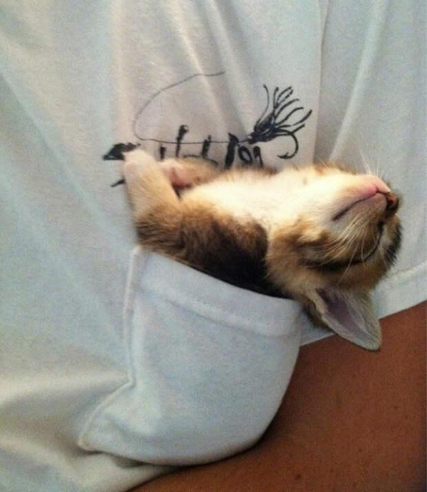 8. Спящая красавица котенок, сон
