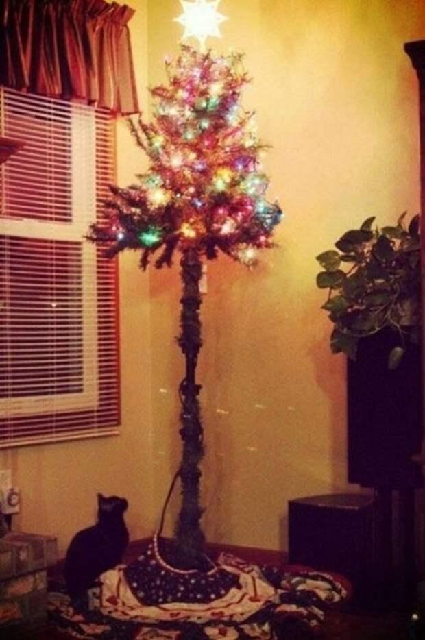 Елки и коты: созданы друг для друга елки, кот