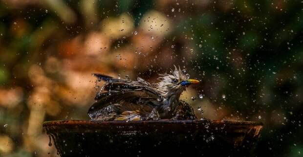 Когда вдохновляют брызги: красота мира в деталях