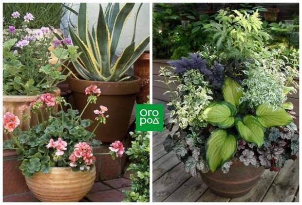 Растения с разными текстурами