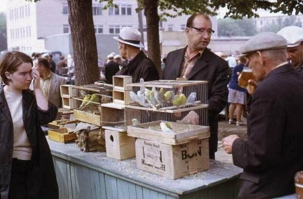 г. Москва,Птичий рынок, 1973 г.
