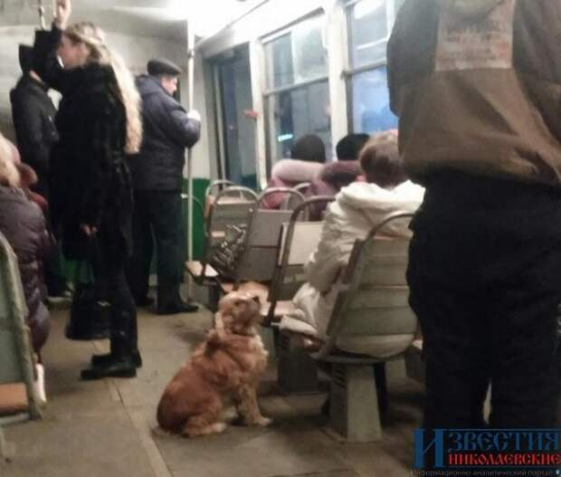 В николаевском трамвае катается пес и развлекает пассажиров