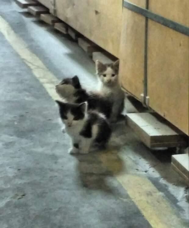 Что будет с котятами через 2 дня - неизвестно!  Умоляем, откликнитесь, неравнодушные люди!!!