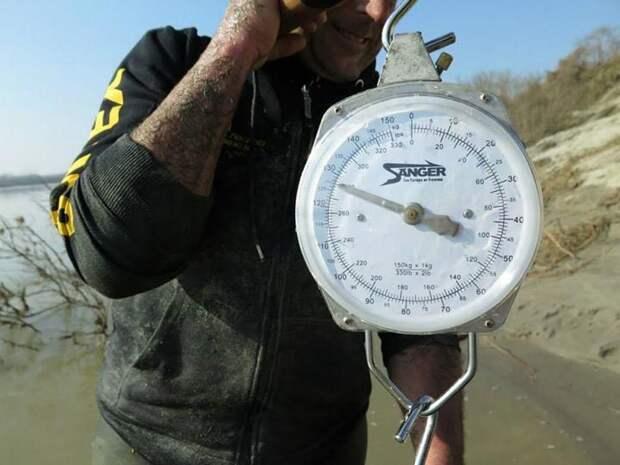 Усатый гигант: рыбак поймал гигантского сома на удочку и прославился на весь мир
