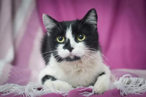 Пятничные котики: черно-белая и прекрасная Мона