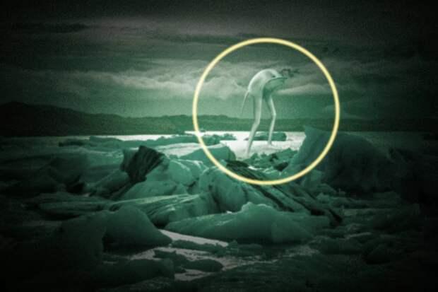Нингены: фантастика или реальность?