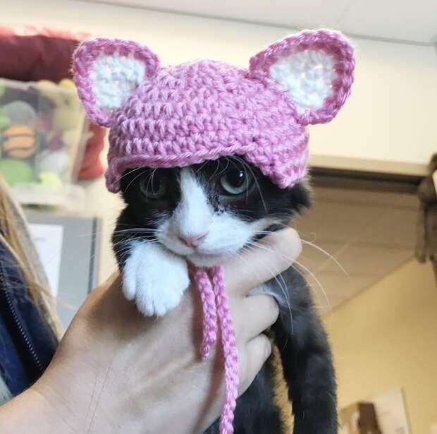 кошка в шапке