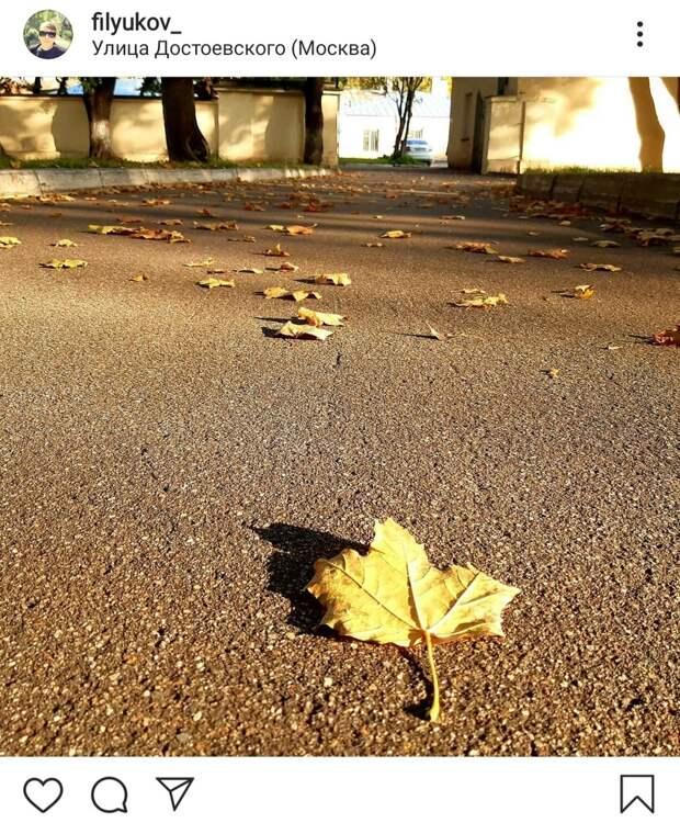 Фото дня: опавшие листья на Достоевской