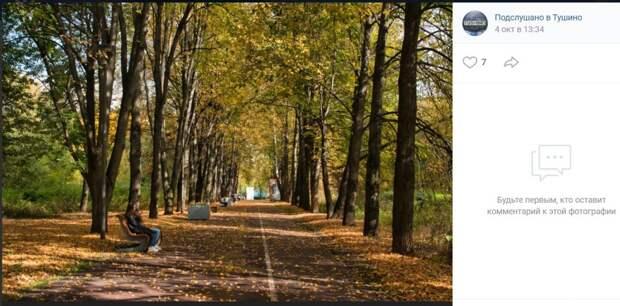 Фото дня: лысеющие деревья «Северного Тушина»