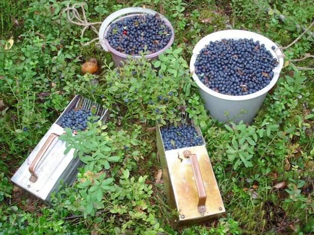 Все сезонные ягоды – просто кладезь антиоксидантов