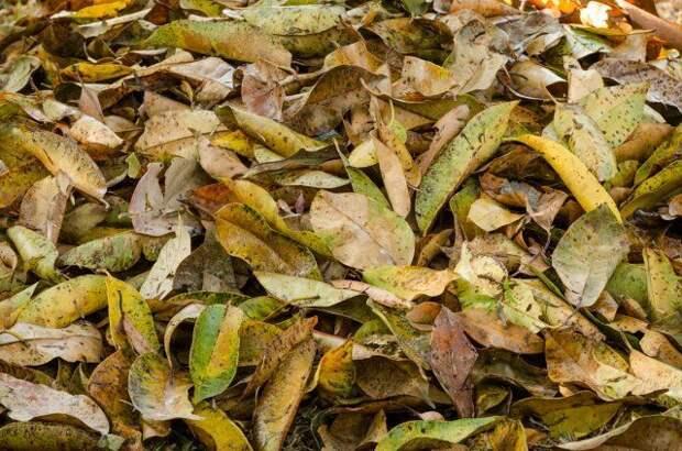 Мульча из листьев